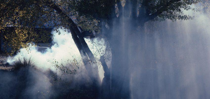 tree + smoke